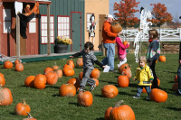Lodi Station Outlets Pumpkin Patch