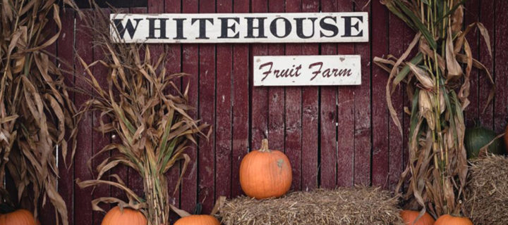 White-House-Fruit-Farm-fall-festival-weekends
